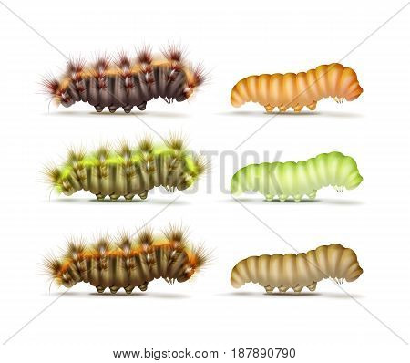 Vector set of different colorful green, orange, brown, furry and smooth caterpillars side view isolated on white background