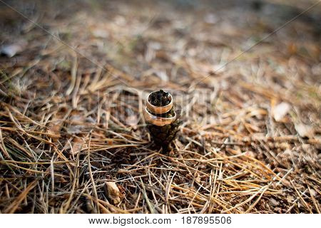 Wedding Rings In The Forest On The Cone.