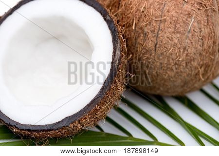 Organic Ripe Coconuts With Green Palm Leaf  On Coconut Leaf On White