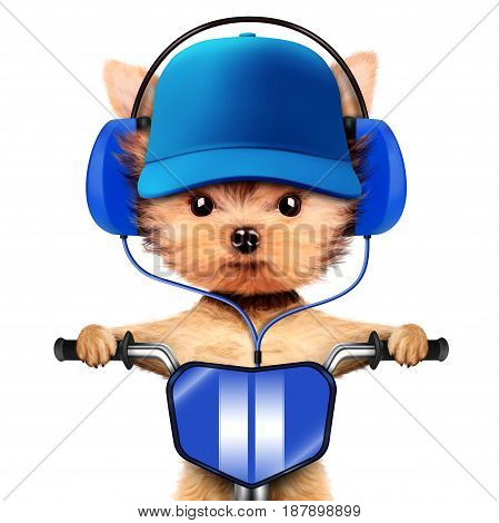 Funny puppy sitting on a bike and wearing headphones and baseball cap, isolated on white. Delivery concept. Realistic 3D illustration of yorkshire terrier
