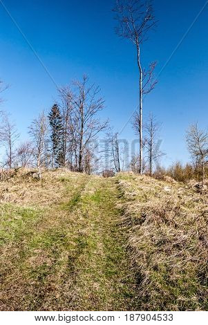 Pavlov vrch hill above Turzovka in Javorniky mountains in Slovakia covered by grass with isolated trees pathway and clear sky poster