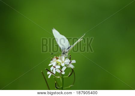 Butterfly on flower with green blur backround.