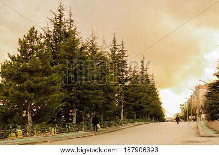 Street view with old pine trees in Eskisehir Turkey. People walking in an empty street.
