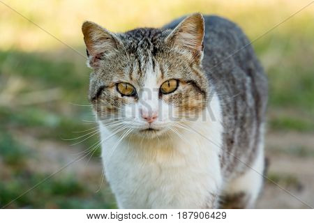 Beautiful free cat in the field looking at camera