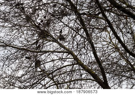 Naked tree branches with bird nests against bright sky background