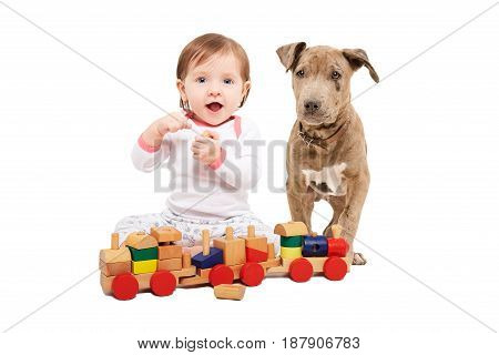 Beautiful baby girl, playing wooden train with a pit bull puppy, isolated on white background