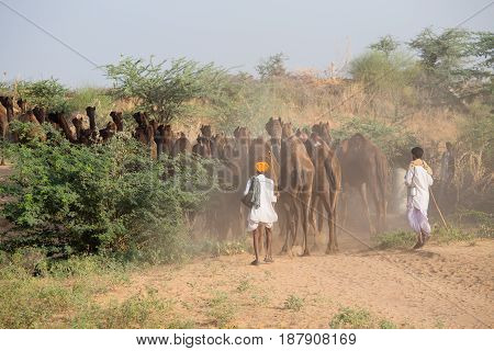 PUSHKAR INDIA - OCTOBER 28 2014: Unidentified Indian men attended the annual Pushkar Camel Mela. This fair is the largest camel trading fair in the world