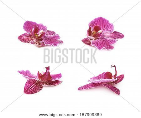 Single orchid flower isolated over the white background, set of four different foreshortenings