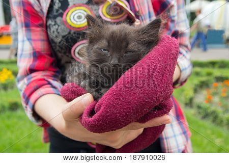 Unhappy homeless kitten in the hands of a volunteer. Pets