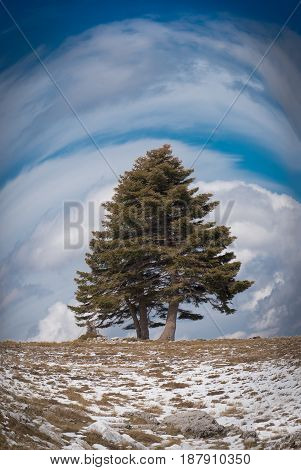 Fisheye view of a winty cloudy landscape with one lone big tree snow on the ground under blue sky and clouds on mountain Helmos near Kalavryta town in Greece