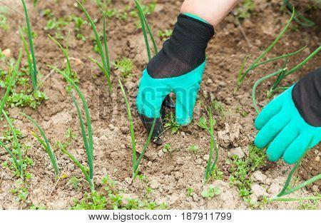 woman weeding garden green two gloves rakes
