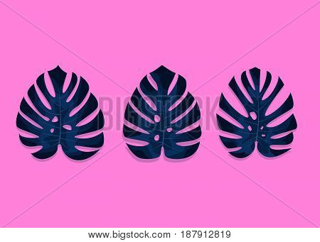 Tropical palm leaves. Monstera leaves on millenial pink background. Three different monstera leaves.