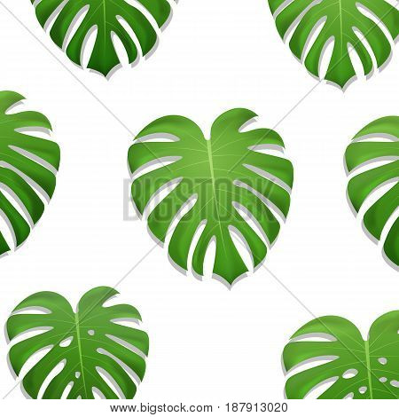 Monstera palm leaves pattern. Monstera leaves on white background. Exotic pattern.