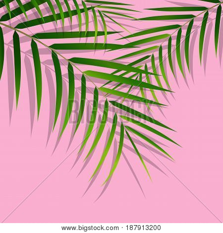 Exotic tropical palm leaves. Botanical leaves on millenial pink background. Exotic background.