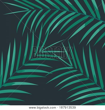 Exotic palm leaves. Palm leaves on white background. Exotic background.