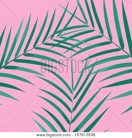 Palm leaves background. Botanical leaves on millenial pink background. Exotic background.