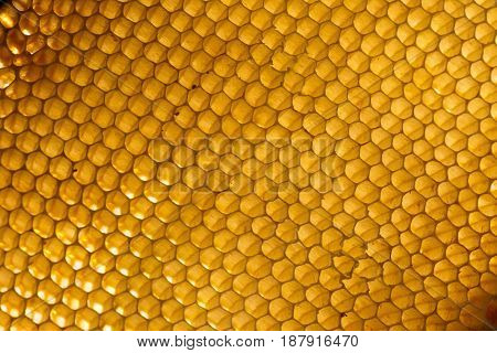 Background. Macro shot of a honeycomb in soft evening light.