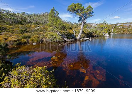Ripples on dark water surface at Wombat Pool, part of Cradle mountain at Lake St Clair National Park. Autumn in Tasmania, Australia