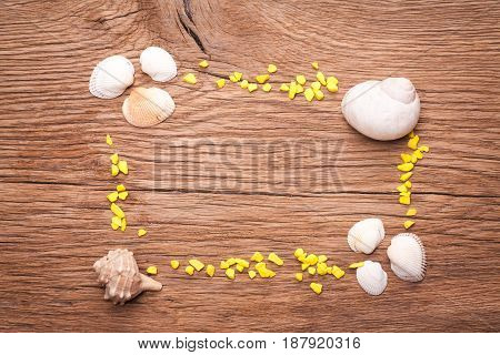 Decorative frame with seashells isolated on white background. Space for text.