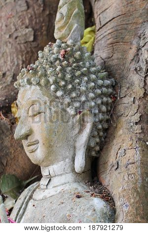 Buddha statue trapped in Tree roots at historical park, Thailand