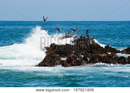 A bunch of bird taking flight as the rock that they are sitting on is getting smashed by a wave