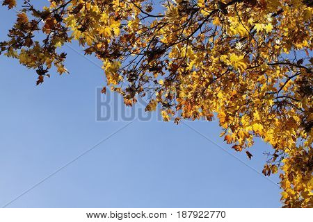 autumn green and yellow leafs on blue sky