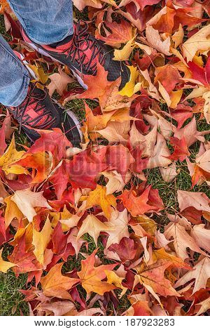 Feet in sneakers standing on colorful leaves in autumn park