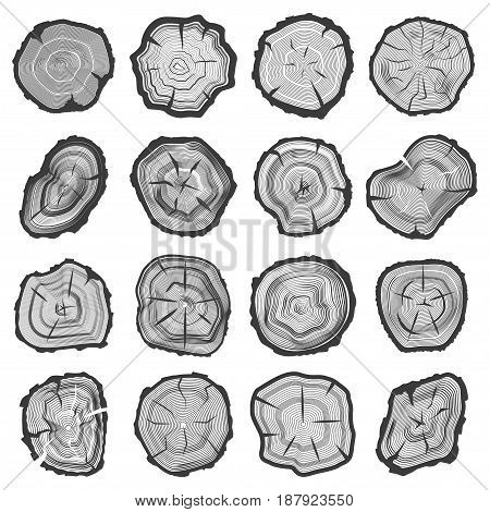 Wood annual rings set, sawcut old tree trunk line graphic with splits and cracks, nature image. Vector flat style illustration isolated on white background