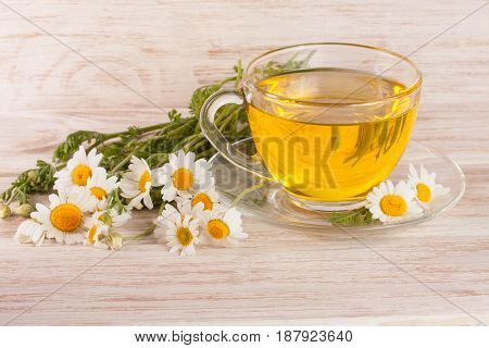 Herbal tea with fresh chamomile flowers on a light wooden background.