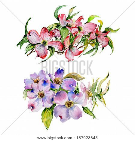 Wildflower dogwood flower in a watercolor style isolated. Full name of the plant: dogwood. Aquarelle wild flower for background, texture, wrapper pattern, frame or border.