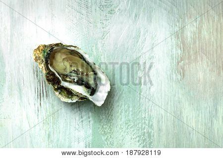 An overhead photo of freshly opened oyster on a wooden background texture with copyspace