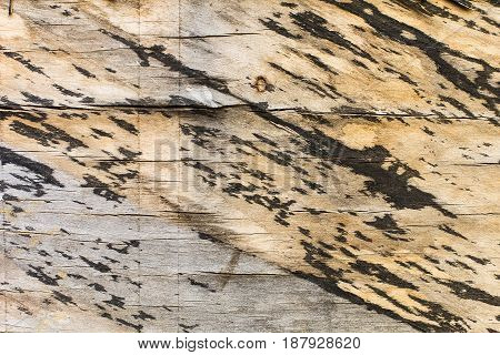 Texture Of Old Wood With Spots Of Paint