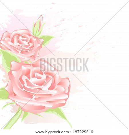Red Rose Floral abstract watercolor style for background