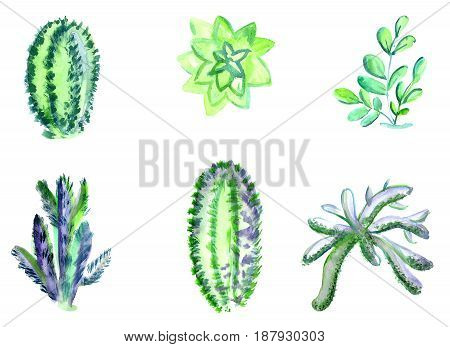 Watercolor cactuses of different species. A set of houseplants.