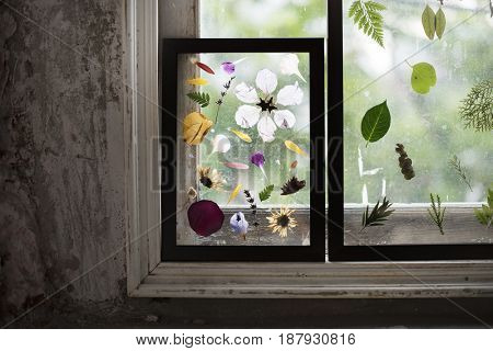 Foliage and pressed flower in a transparent frame