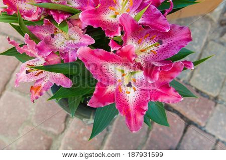 beautiful bouquet of pink lilies on cobblestones background