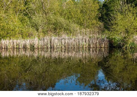 Trees and reed are reflected on the surface of a pond in Normandy Park Washington.