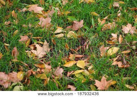 Colorful background of autumn leaves. Shot in outdoor