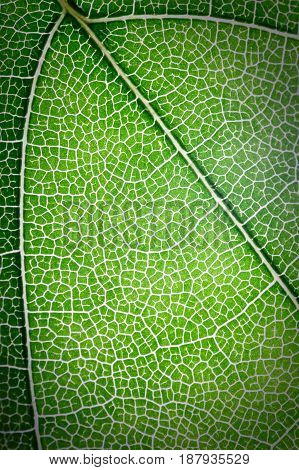 Green botanical leaves texture use as background