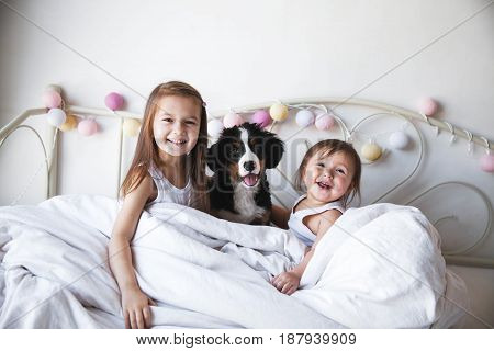 little girl in a big basket stoey playing with a dog. animals, recreation, game, family