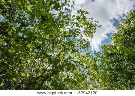 forest tree summer. Beautiful Green trees landscape