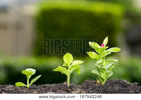 Group of growing trees on soil - growth concept