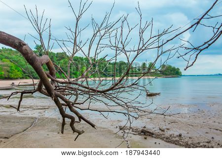 Old dry tree lies on the sand on the sea