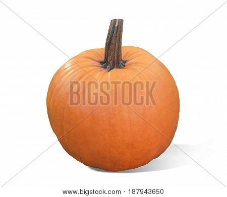 Pumpkin isolated on white background. Fresh and orange. Top view of a pumpkin isolated for Halloween, Thanksgiving day, other autumn Holidays.