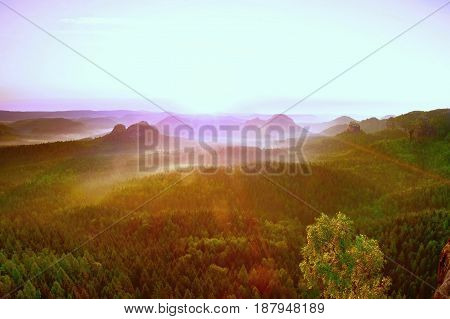 Misty Colorful Morning. View Over Birch Tree To Deep Valley Full Of Heavy Mist. Autumn Landscape Aft