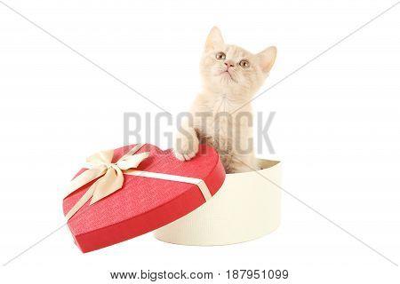 Ginger Kitten In Heart Gift Box Isolated On A White