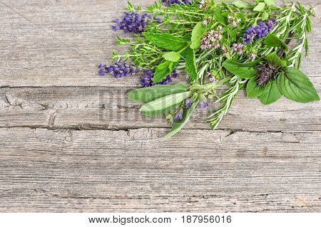 Bundle of fresh herbs. Basil rosemary sage thyme mint oregano marjoram savory lavender