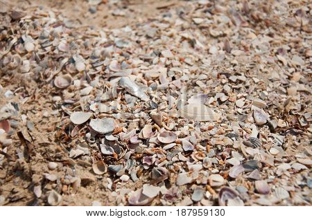 Many Sea Shells. Beautiful Sea Background