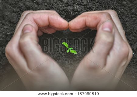 Love and protect nature. Woman Hands forming a heart shape around a small plant. Ecology and care concept. Environmental problems