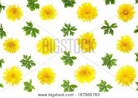 Colorful floral pattern of yellow dandelions and leaves of geranium isolated on white background. Festive spring background. Flat layout top view
